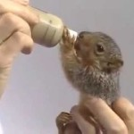 Bob Ross feeds Peapod the squirrel