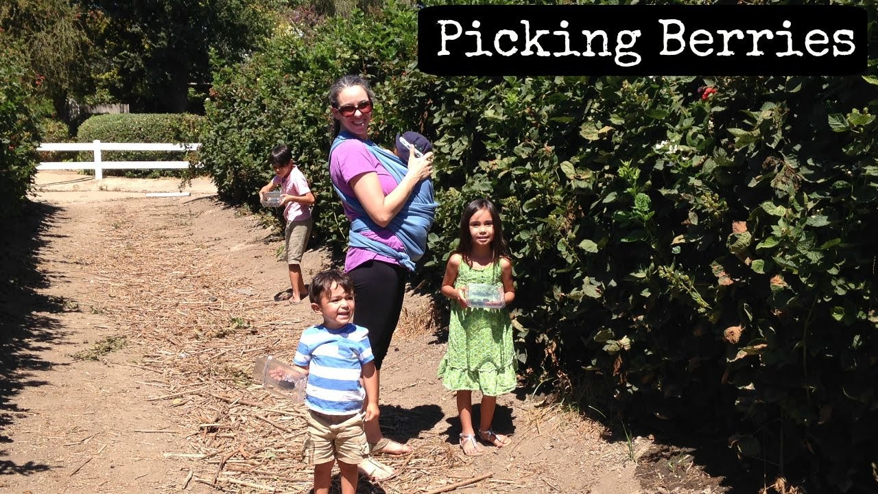 Picking Berries – Our Trip To A Farm
