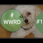 Decorating Your Home with Pets in Mind | #WWRD 10 | Interior Design
