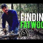 How to Find Fatwood- Quick Tip