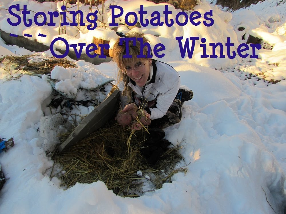 Off Grid Winter: How To Store Potatoes Long Term | diy fyi