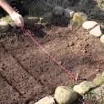 How to Plant a Small Vegetable Garden