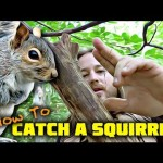 EASY Survival MEAT! Squirrel Pole Snare Set-Up – SURVIVAL TRAPS / SNARES 101